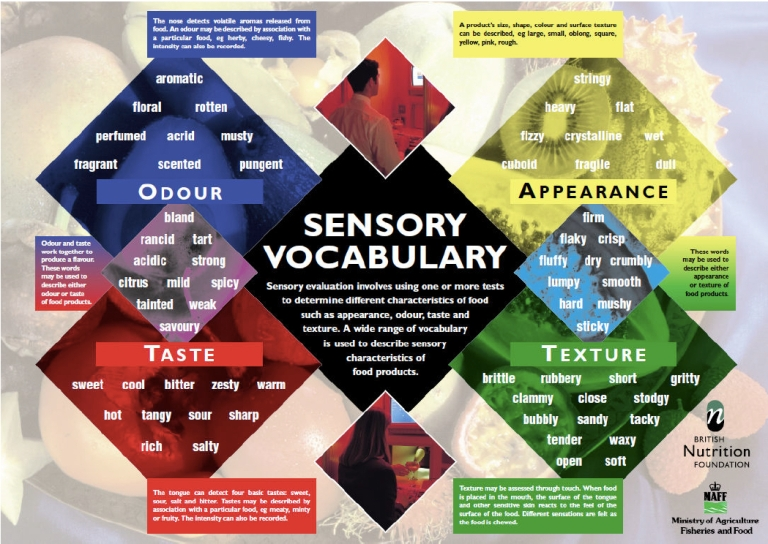 sensory vocabulary image.jpg